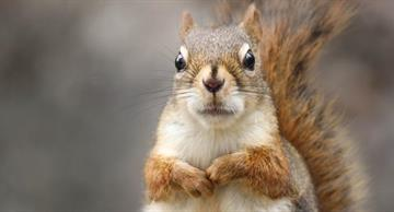 The cutest squirrel has her own instagram account!