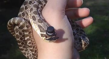 Most adorable snakes and their fancy hats!
