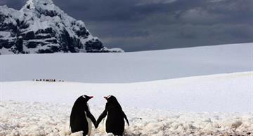 15 amazing photos of graceful penguins