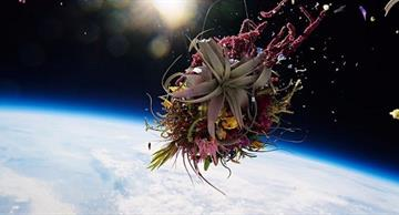 The first ever plant grown in space looks terrific!