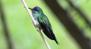 The hummingbird's snore is the cutest in the world!