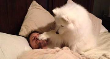 This cute dog knows how to wake up her human properly