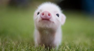 10 precious little animals that will melt your heart at once