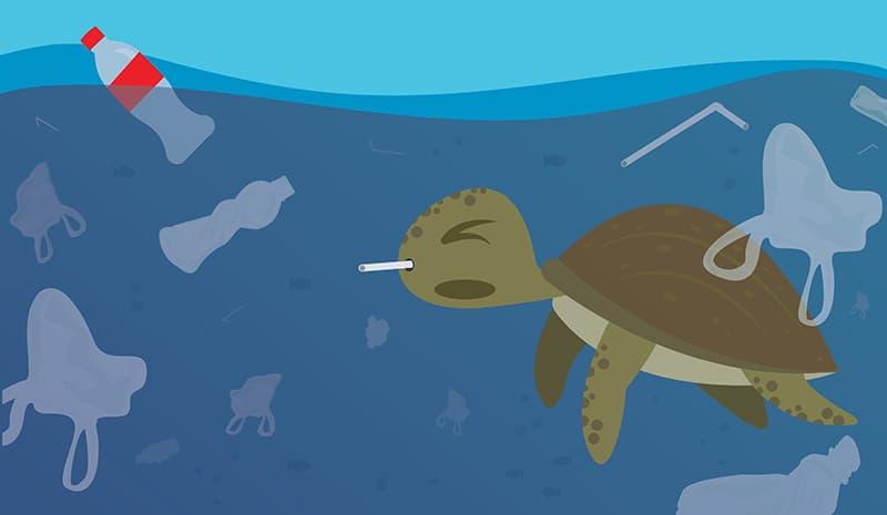 Culture Story: plastic straws turtle pollution plastic bags bottles ocean sea nature danger environment