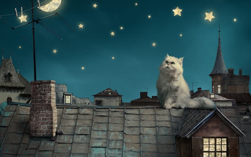 Nature Story: cats in dreams meaning