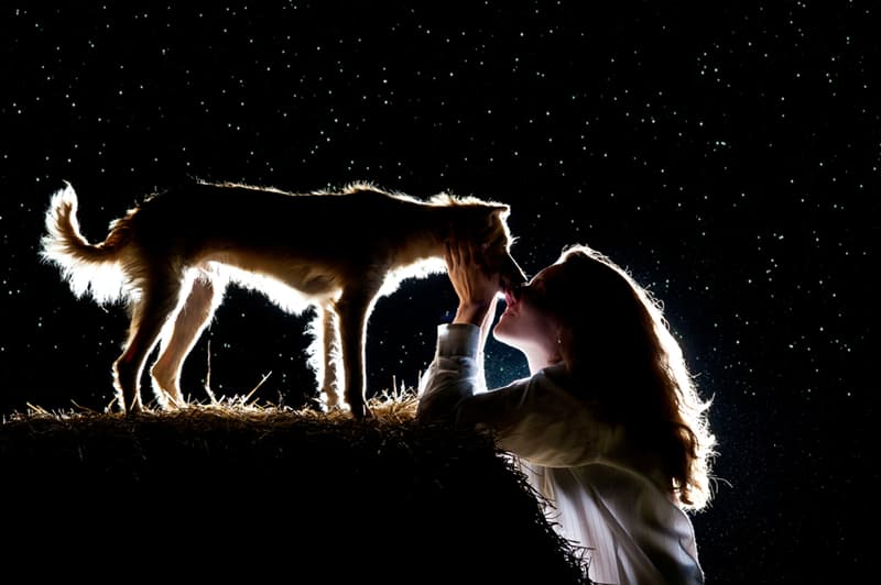 Nature Story: dogs in dreams meaning