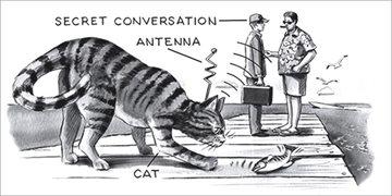 История Story: ЦРУ пыталось шпионить за СССР используя котят