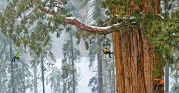 География Story: Фотографам понадобилось 32 дня, чтобы сделать снимок гигантской секвойи