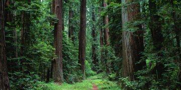 География Story: Самые волшебные леса мира - места, где хочется потеряться!