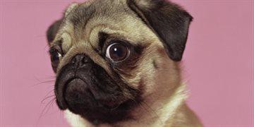 Story: Вас заметили! Самые забавные зрительные контакты с животными