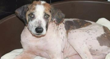 A poor stray dog was given the second chance thanks to a British couple