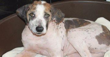 Общество Story: Несчастная собака получила второй шанс благодаря семейной паре из Британии
