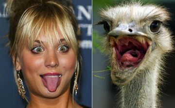 Общество Story: Эти забавные животные один в один голливудские знаменитости. Проверьте сами!