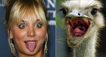 These funny animals look like celebs. Check it out!