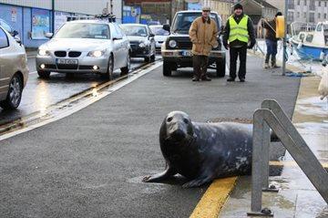 География Story: Тюлень решил полакомиться рыбкой в ресторане!
