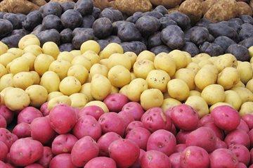География Story: 10 удивительных фактов о самом популярном корнеплоде в мире!