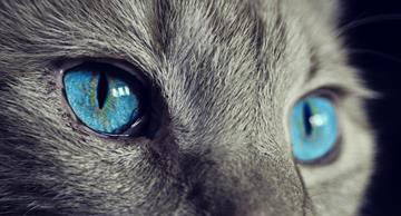 This amazing photo project will let you see the world through a cat's eyes!