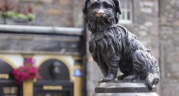 Bobby Greyfriars – a dog who spent 14 years guarding his master's grave until he died himself!