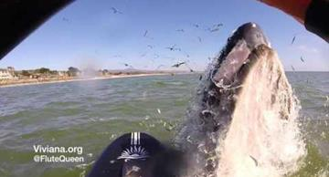Video: a musician tries to decoy a whale by playing her flute!