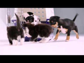Культура Story: Видео: эти котята впервые познакомились с щенками!