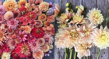 You will fall in love with these amazing flowers. Heaven on Earth!
