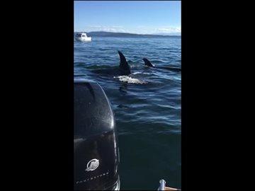 География Story: Тюлень-счастливчик: этот ловкач спасся от неминуемой смерти!