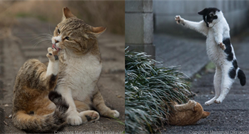 Homeless but extremely sweet Tokyo cats