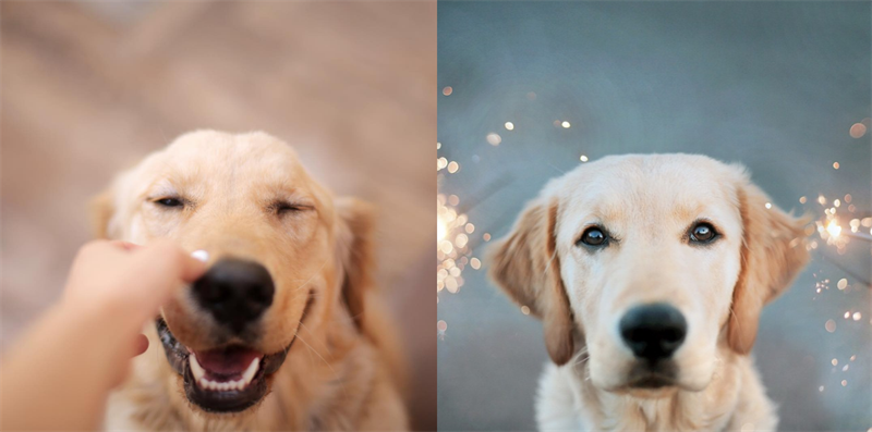 The happiest dogs ever - pictures that will definitely melt your heart