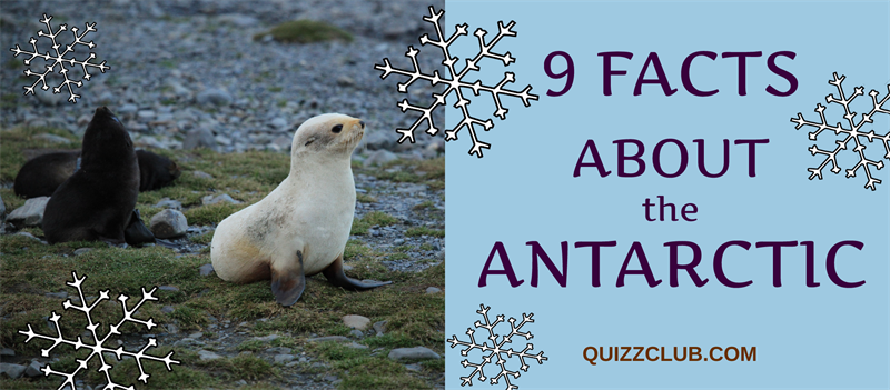 9 interesting facts about the Antarctic