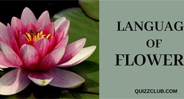 Language of flowers: facts you haven't heard before