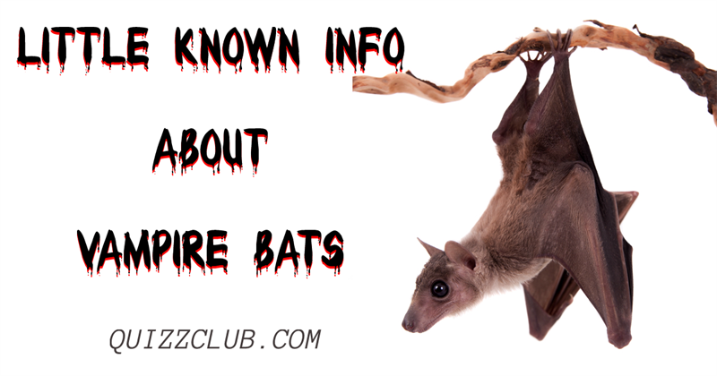 Vampires exist: little-known information about bats