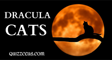 These Dracula cats will obtain your heart