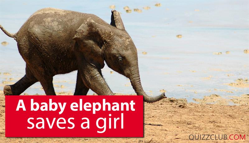 Society Story: A baby elephant saves a girl