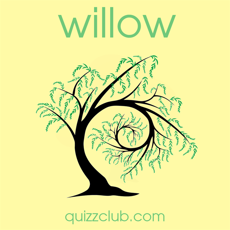 Society Story: Willow