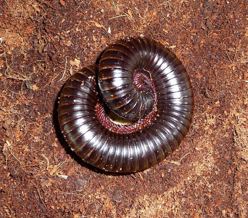 Story: #5 Some African earthworms may be up to 6 meters in length!