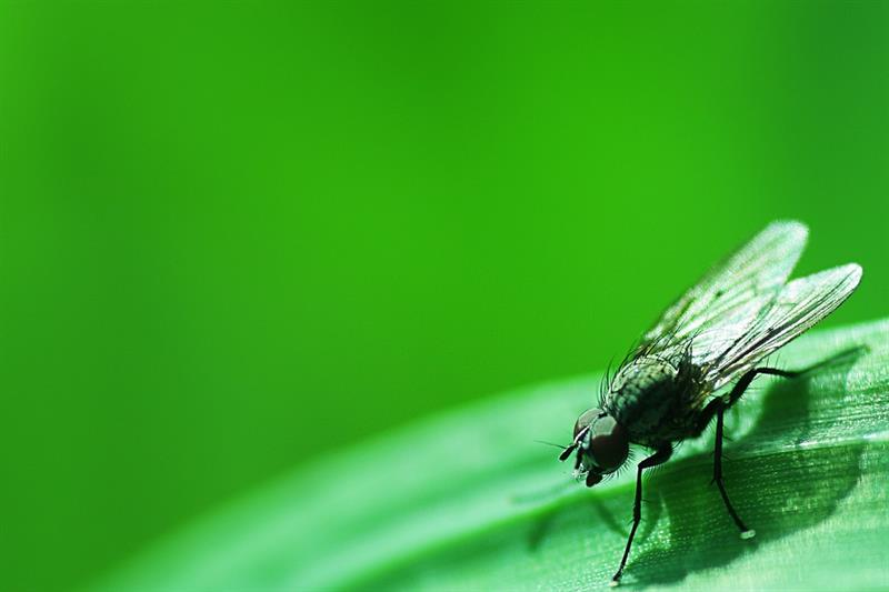 Story: #9 The average of a fly's life is not more than 2-3 weeks