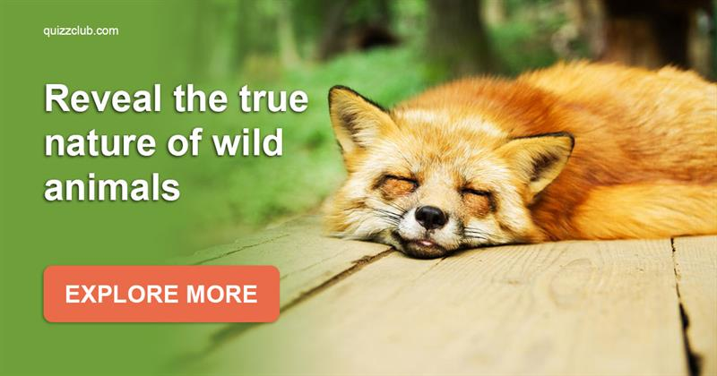 Story: 25 mind-blowing facts about wild animals