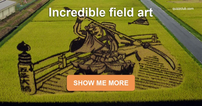 Geography Story: Japanese villagers create enormous masterpieces on the rice fields