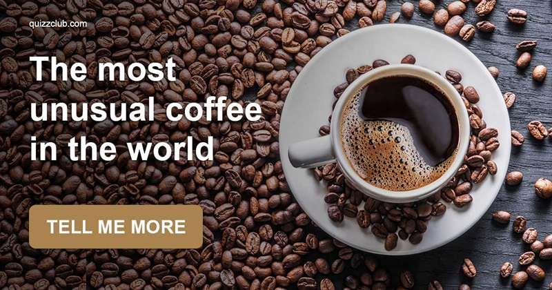 Culture Story: Avolatte and other coffee drinks most people never heard of
