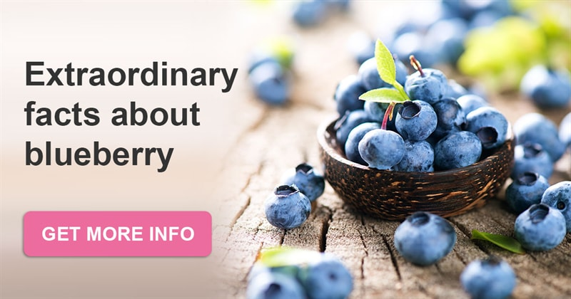 Culture Story: Blueberry - interesting facts about the native plant of North America