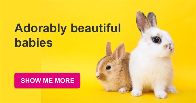 Story: The most adorable baby bunnies that will win your heart