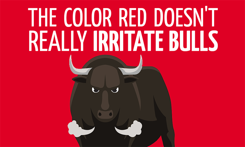History Story: The color red doesn't really irritate bulls