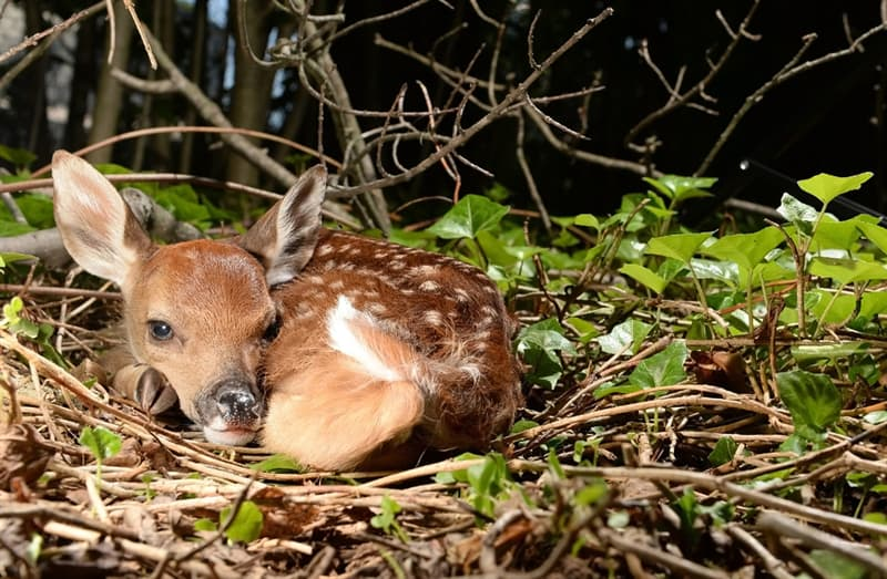 animals Story: Baby deer