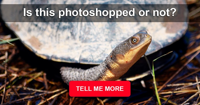 Nature Story: 10 photos that are believed to be photoshopped