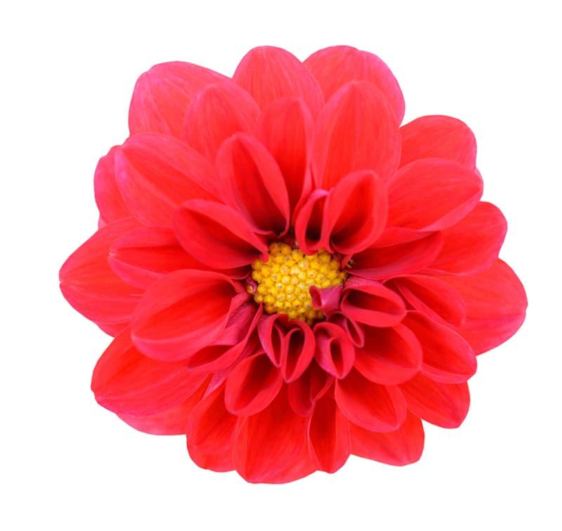 Society Story: Flower #2