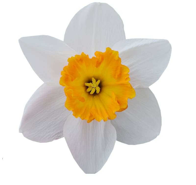 Society Story: Flower #4