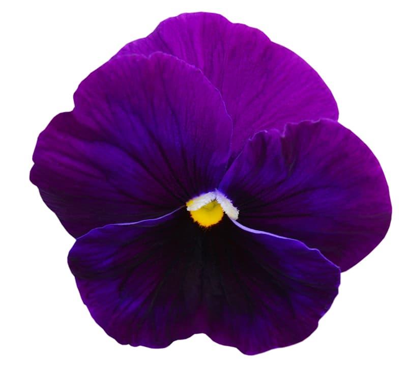 Society Story: Flower #5