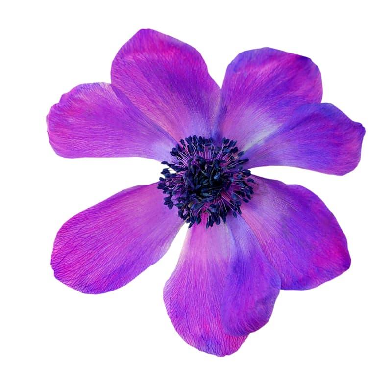 Society Story: Flower #7