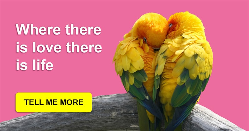 Story: These amazing parrots show what a true love is