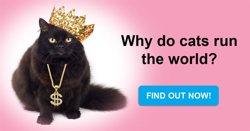 Nature Story: Why do cats run the world? The whole truth about furry rulers of our life.